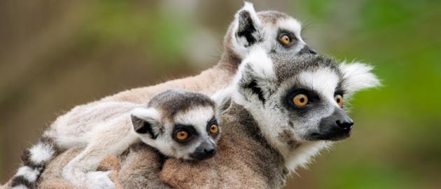 Przygoda na Nosy Be (Madagaskar)