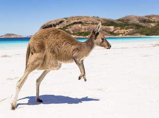 australia_glowne