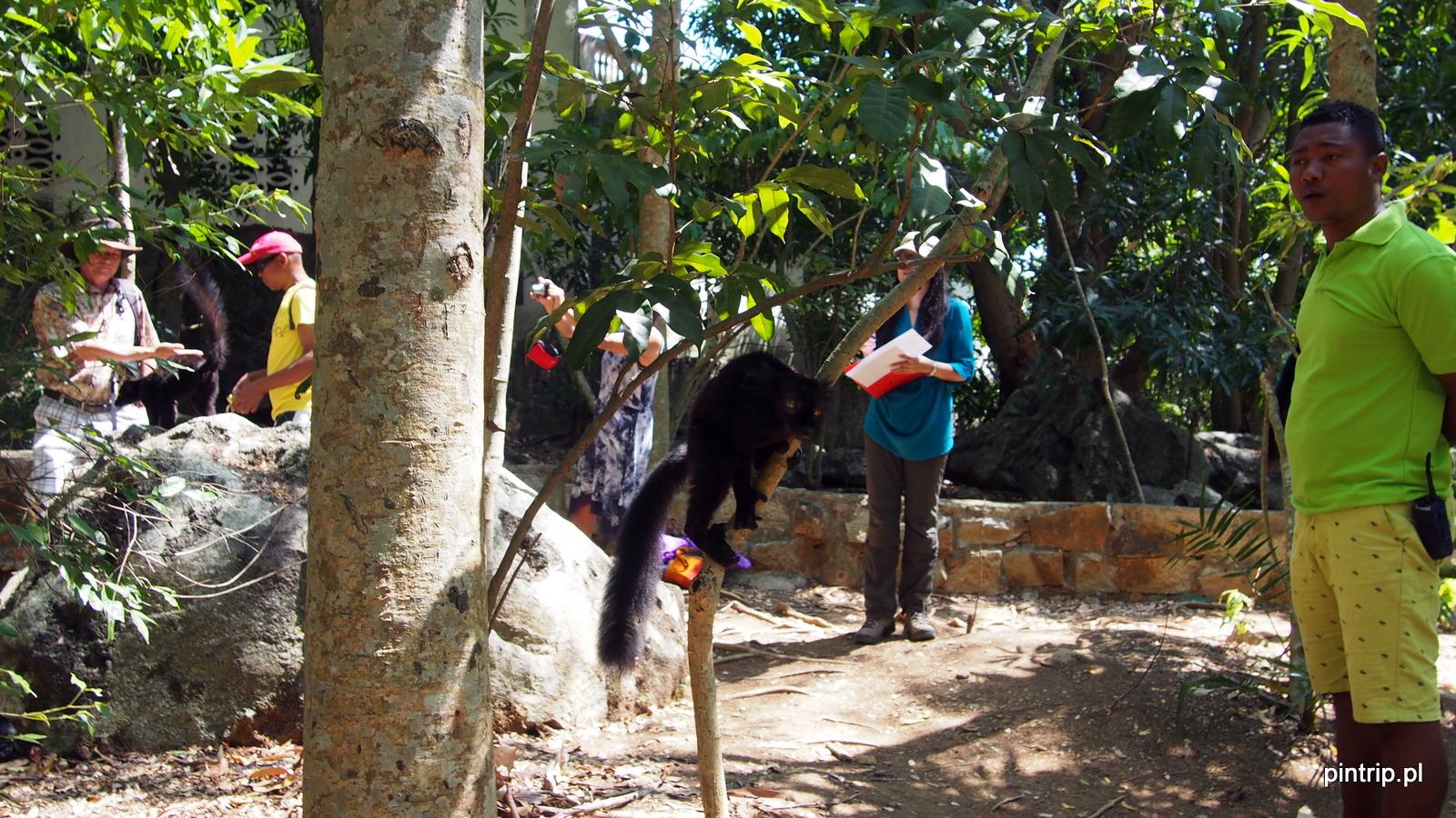 lemuria land nosy komba madagaskar